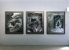 <p>WithPhoto London 2018just around the corner, we look at the photography and artists to visit at these years fair and satellite events. THE WORK 'Black Palms' by Karine Laval One of the highlights for us last year was working with Crane Kalman Galleryagain and producing thesebespoke grey floating box-framesfor Karine Laval's 'Black Palms' prints. THE [&hellip;]</p>